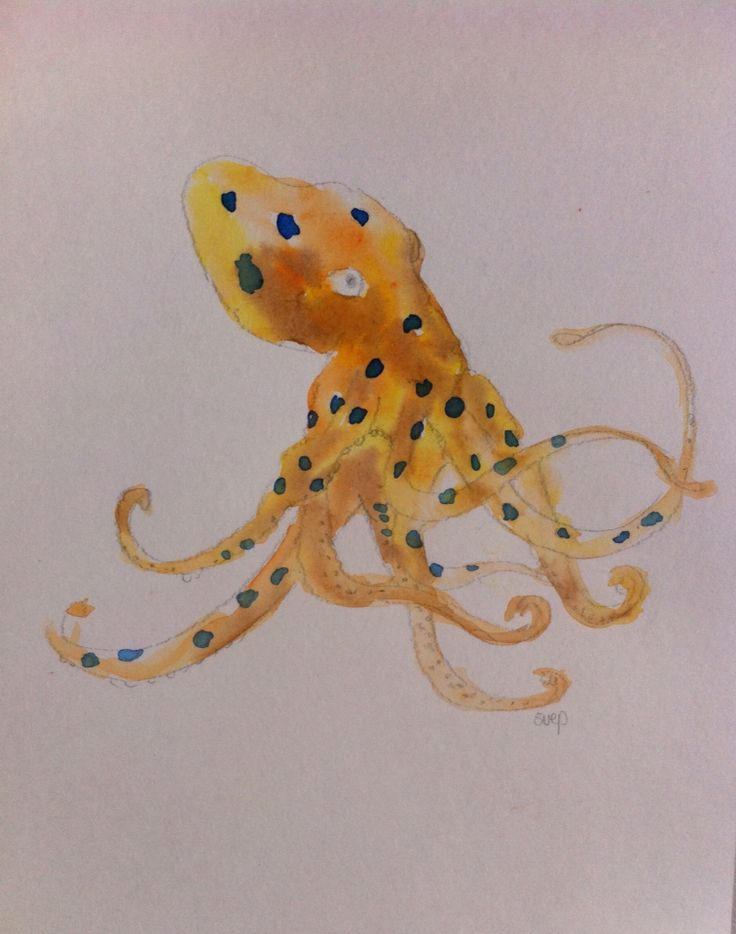 """""""Blue spotted octopus"""" - original watercolour painting. For sale, unframed 29.7cm x 21cm. Follow more of my marine art-science storytelling as Dr Suzie Starfish on Facebook"""