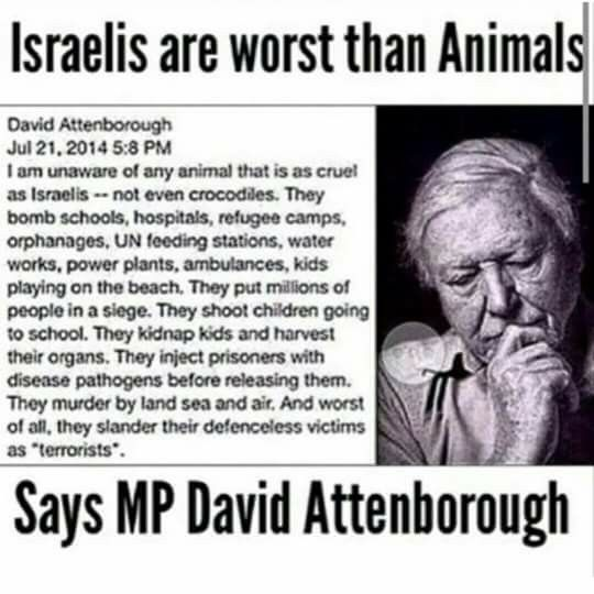 Israelis are WORST THAN ANIMALS