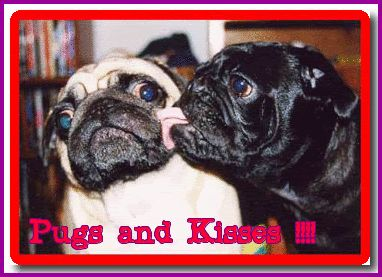Pugs and kisses :D
