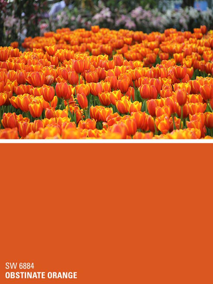 Sherwin Williams Paint Color Obstinate Orange Sw 6884