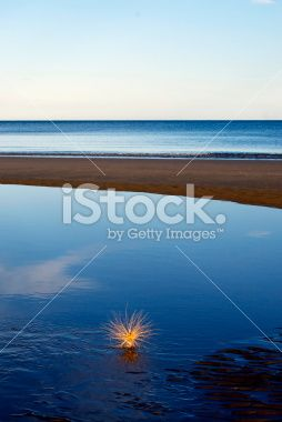 Spinifex Grass on New Zealand Coast Royalty Free Stock Photo