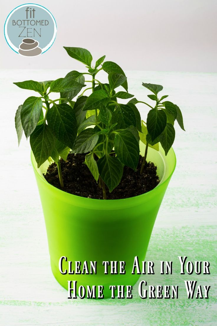 Before you buy an expensive air purifier try this fit for Buy air purifying plants