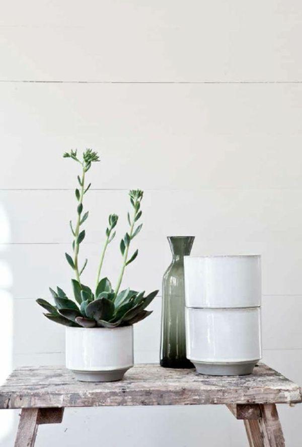tolles der weihnachtskaktus bringt mehr farbe ins haus wahrend der kaltesten jahreszeit eindrucksvolle pic oder badafaebdaeebfc houseplants indoor plants