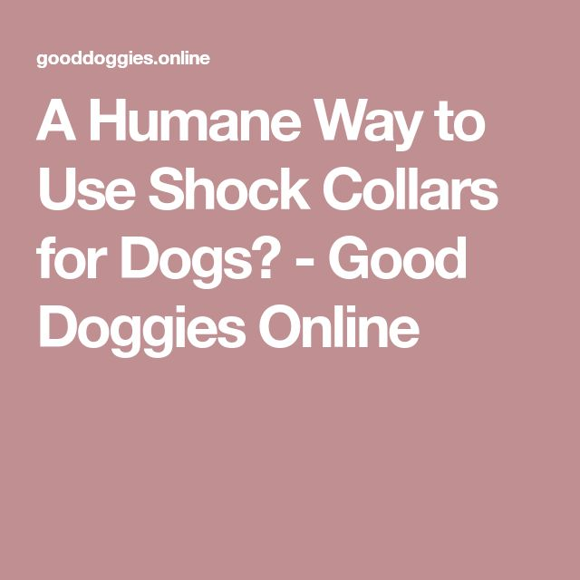 A Humane Way to Use Shock Collars for Dogs? - Good Doggies Online