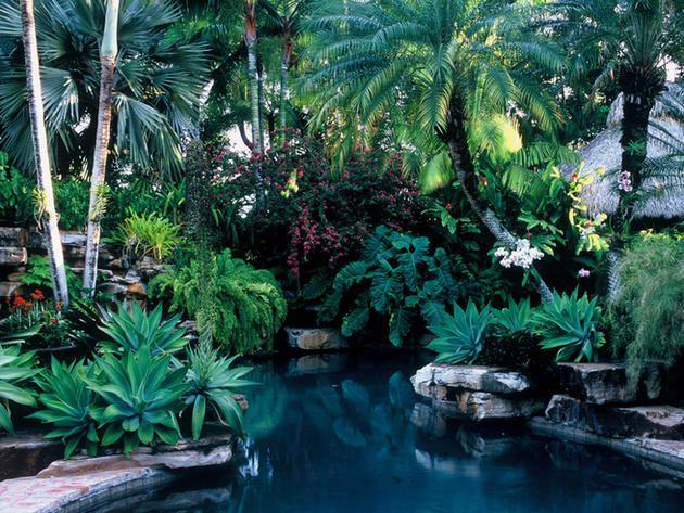 jungle like pools - Google Search | Pools | Pinterest
