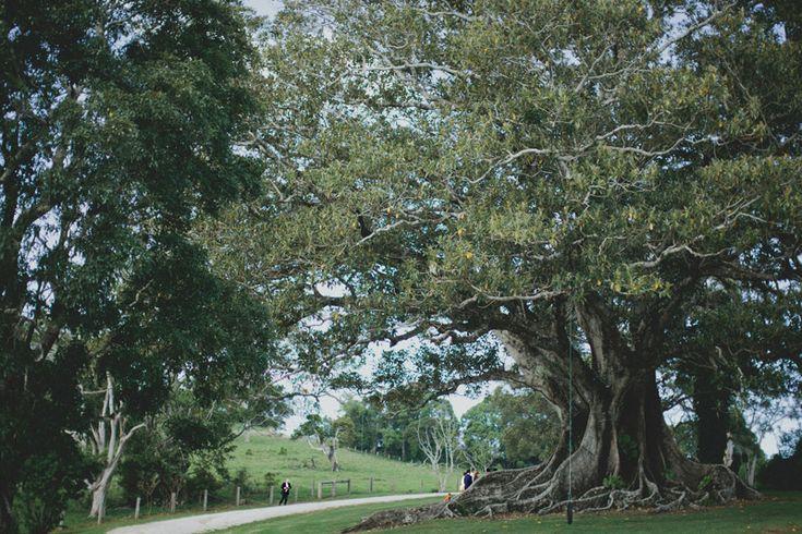 Under a Tree - Coorabella