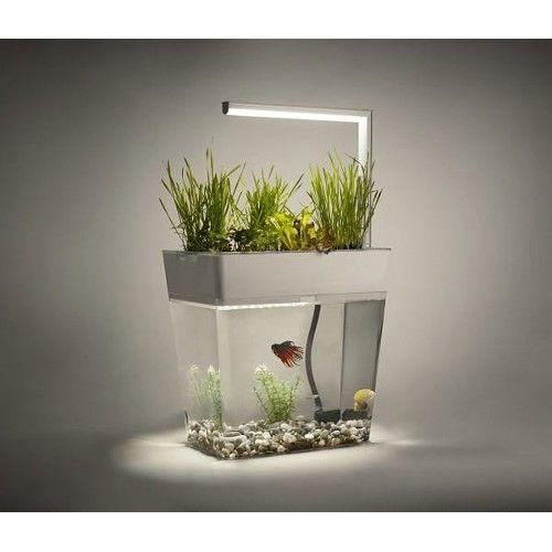 Aquagarden Ekolojik Akvaryum 249,00 TL ve ücretsiz kargo ile n11.com'da! Aqua Garden Design Akvaryum fiyatı Evcil Hayvan Ürünleri kategorisinde.