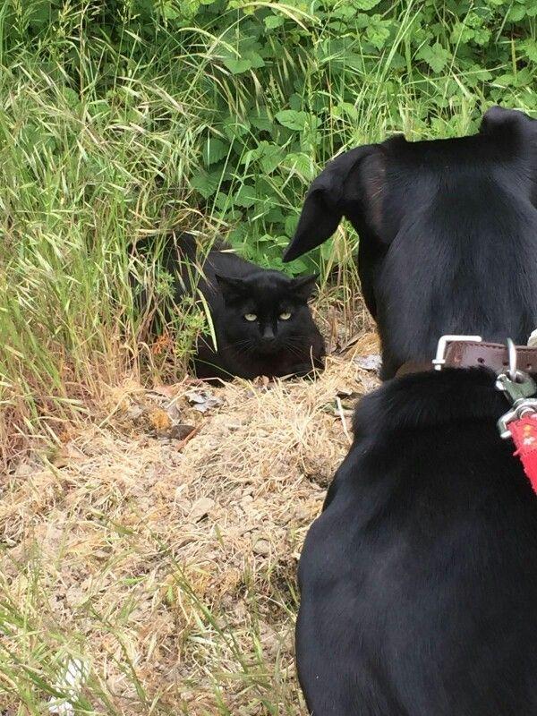 Caro gatto è meglio se scappi