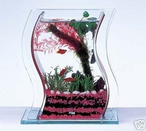 An aquarium for spicy girls! The shape really looks cool and for just $29,79 it's a perfect start into the fishkeeping hobby!