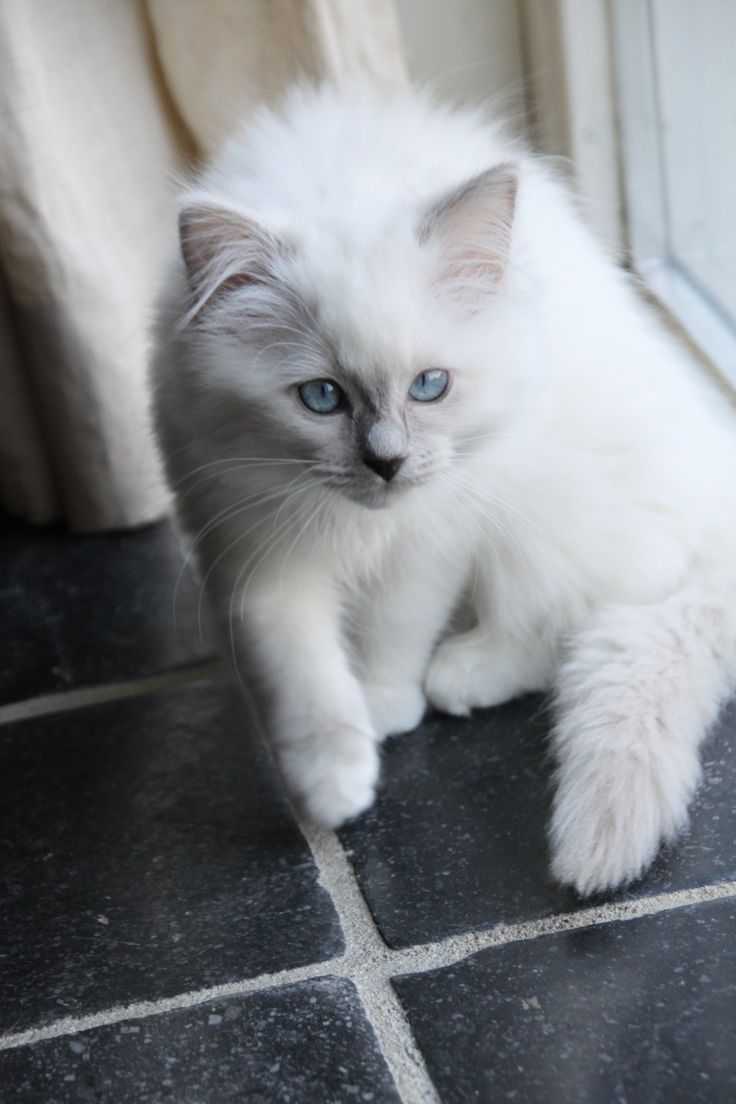 Lilac Mitted (gorgeous!)
