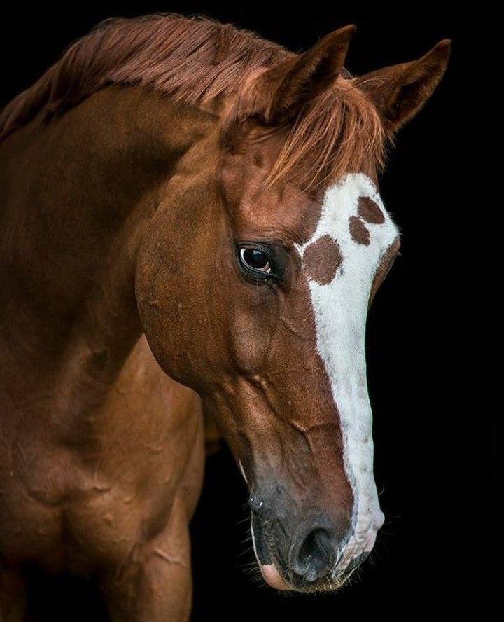 картинки голов коней