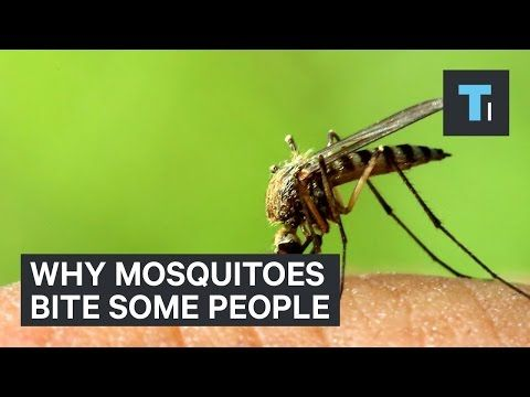 THIS Is Why Mosquitoes Bite Some People And Not Others
