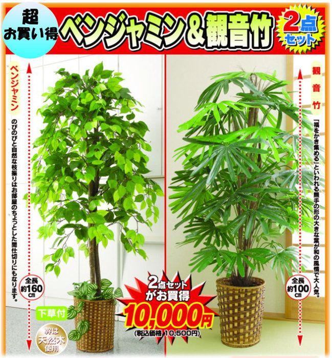 観葉植物ベンジャミン&観音竹2点セット【人工植物、人工観葉植物】