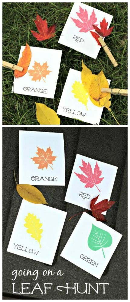 We're Going on a Leaf Hunt with these free printable cards! Preschool color matching, learn leaf type and math activities for preschool, 1st, 2nd, 3rd, 4th & 5th grade included!