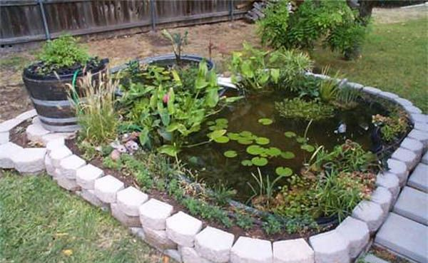 20 best ideas about pond plants on pinterest backyard for Outside pond plants
