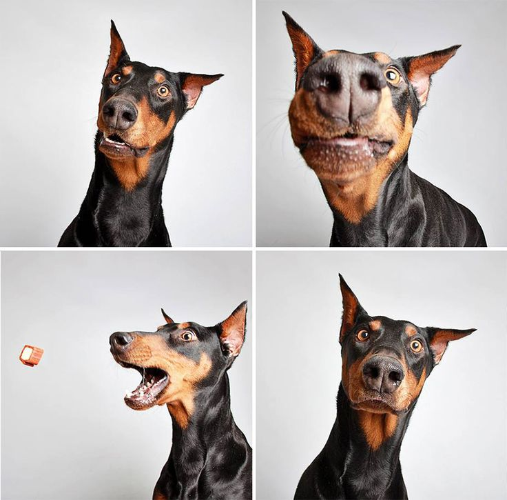Dogs Posed In A Photo Booth To Help Themselves Find A New And Loving Home