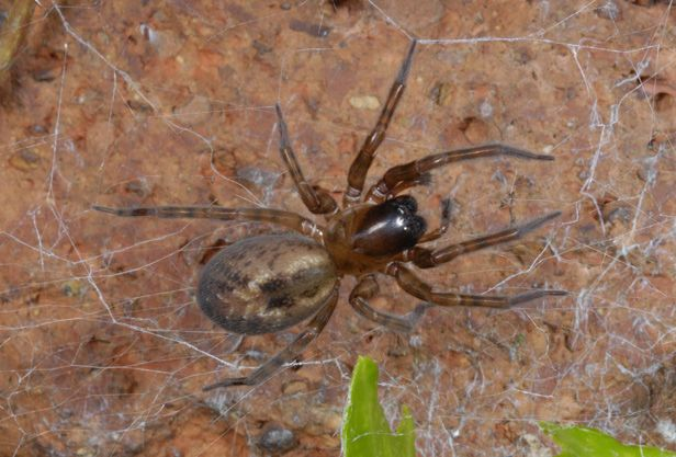 10 common spiders you're likely to find in a British home - BT