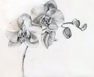 r sultat de recherche d 39 images pour tatouage orchid e. Black Bedroom Furniture Sets. Home Design Ideas