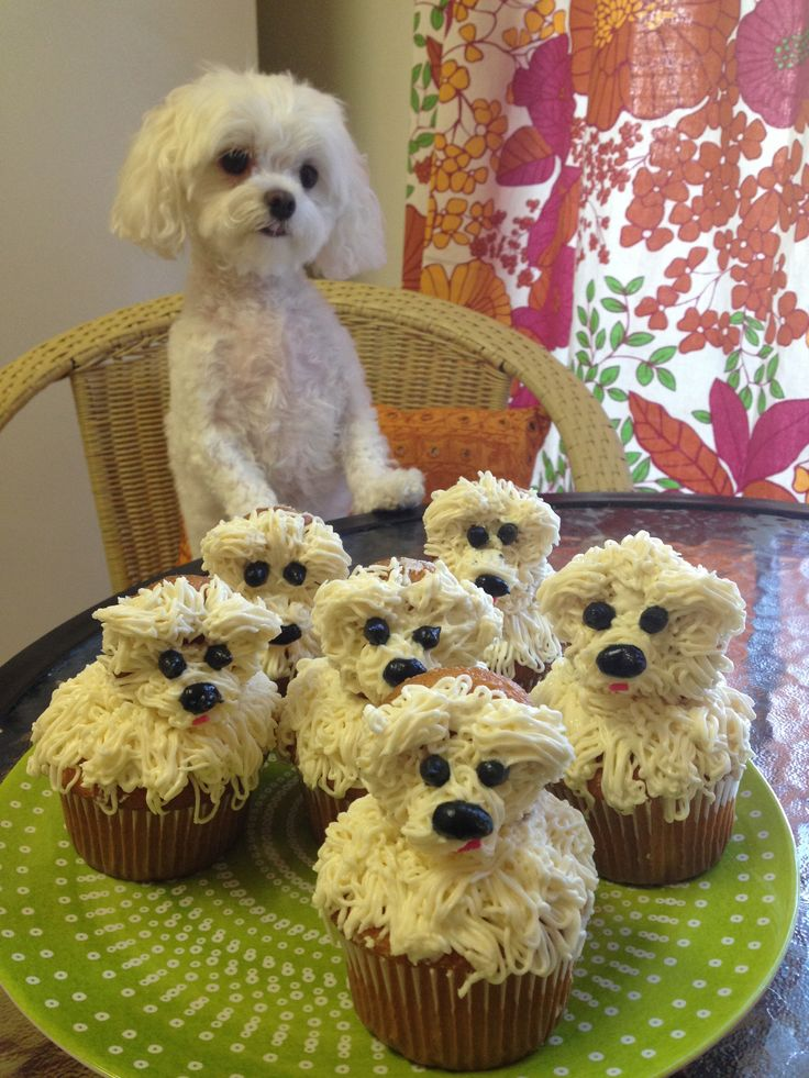 I love the puppy's expression, but those cupcakes are funny looking.