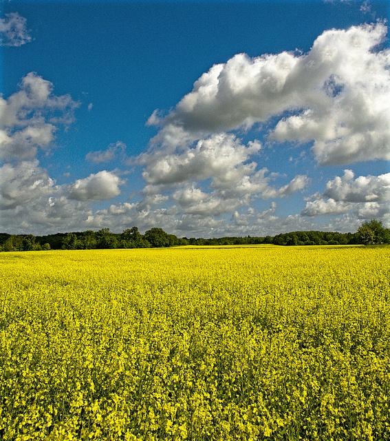 Spring in Skåne, Sweden !!  by Luca Pradella, via Flickr