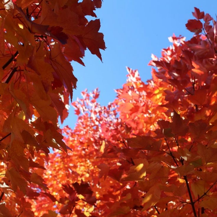 Another glorious autumn day in Tenterfield.