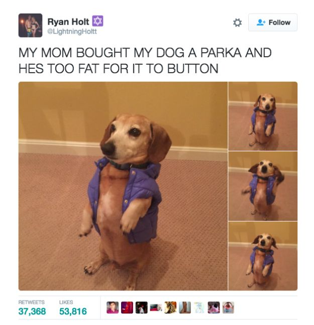 This dog who's looking really damn sharp.   19 Times Dogs Were The Gift The Internet Didn't Deserve