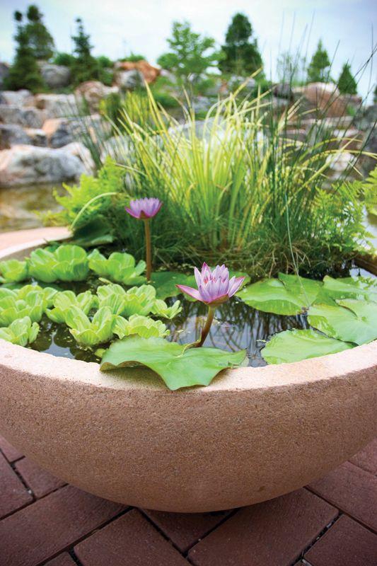 simple water garden
