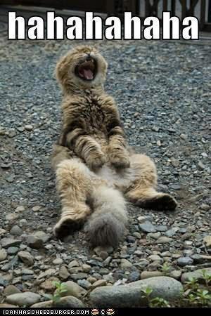 hahahahahahahahahahahahahahahahahaha | funnny | Cats ...