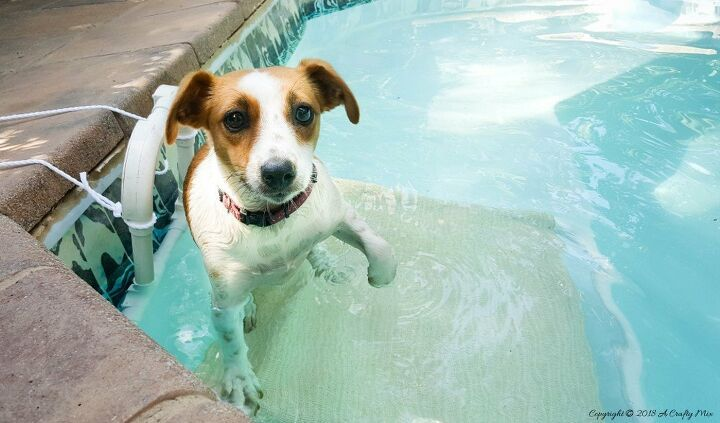 Easy And Cheap Plastic Drawer Makeover Idea In 2020 Dog Pool Puppy Pool Dog Pool Ramp