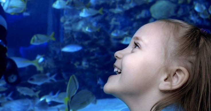 Curas para um peixe ciclídeo doente. Os ciclídeos estão entre os peixes de aquário mais populares e interativos. Ao contrário de muitas outras variedades de peixes, os ciclídeos parecem reconhecer as pessoas do outro lado do vidro, e podem até aprender a responder à voz do seu dono. Esse comportamento interativo torna os ciclídeos maravilhosos animais de estimação para toda a ...