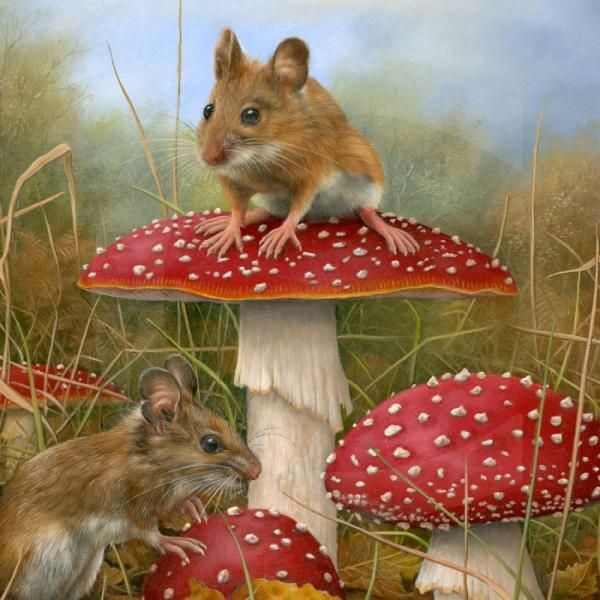 Wildlife Paintings by Carl Whitfield | Cuded