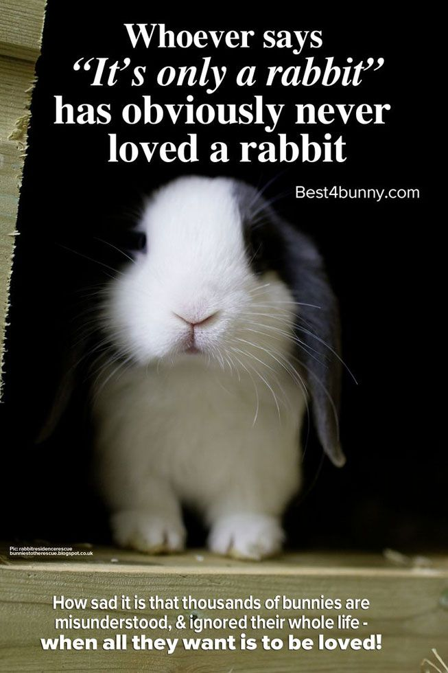 Sadly rabbits are the most neglected & misunderstood pets. Here we explain what so many people fail to see in bunnies & why it breaks our hearts!