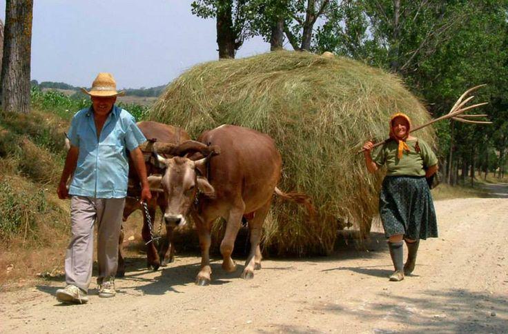 Country life in Mehedinti County - #Romania  Source: mehedinti-majdanpek.ro