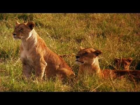 Earth - La savana africana - YouTube