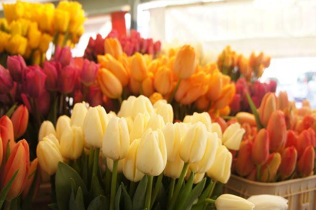 Pink, yellow, cream tulips. Pike Place Market, Seattle, Washington USA.