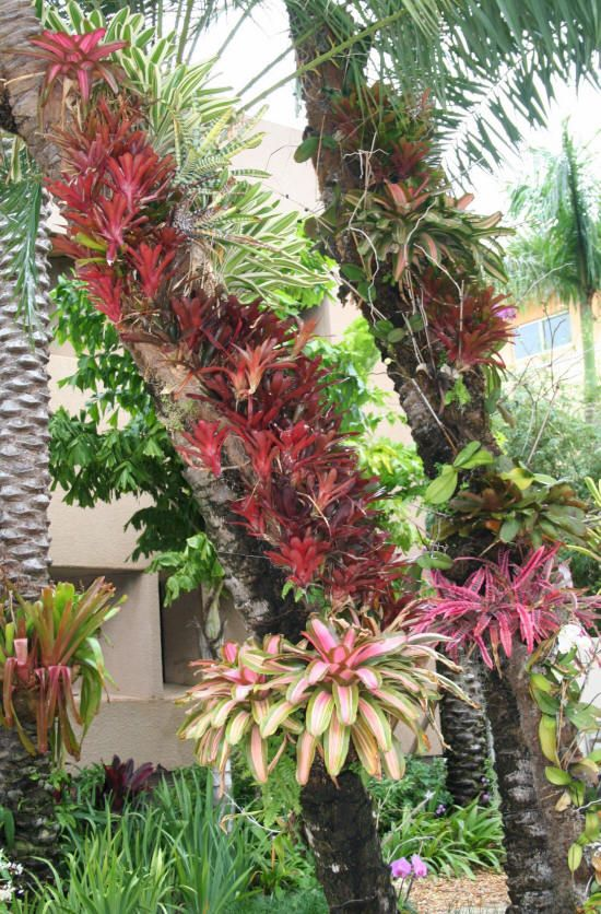 Bromeliads.  They grow on trees in my south FL yard, and all around the base of the trees.  They also have gorgeous, very unusual flowers.  Bromeliads do not harm their host trees… they get nutrients mainly from rain.