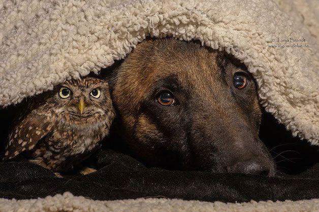 A+união+entre+cão+e+coruja+prova+que+todas+as+amizades+são+possíveis!