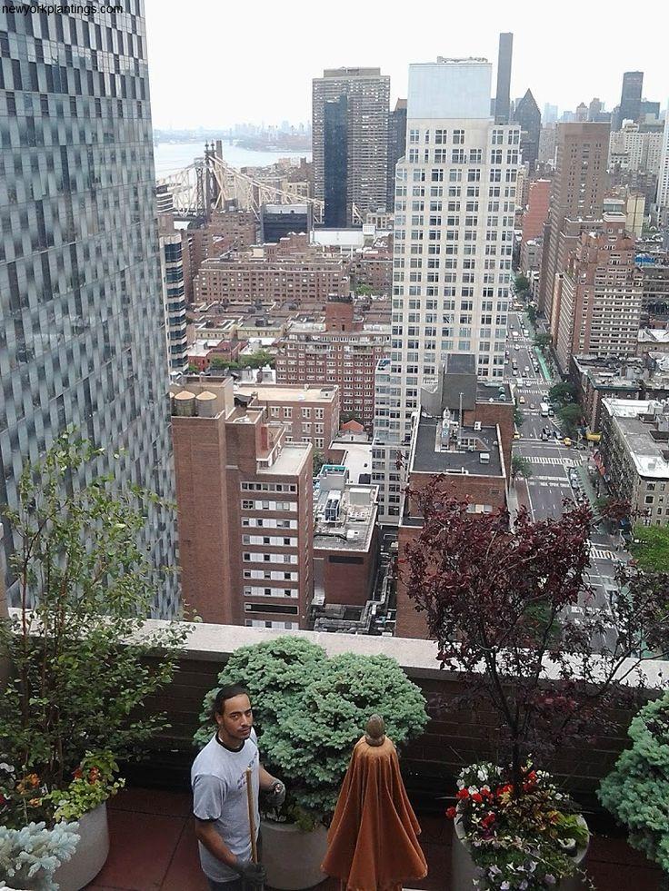 Springgardendesignernyc #landscapedesignernyc #greenrooftopgardendesignnyc http://newyorkplantings.blogspot.in/2012/06/green-roof.html?showComment=1454679233558#c5580579657261878465