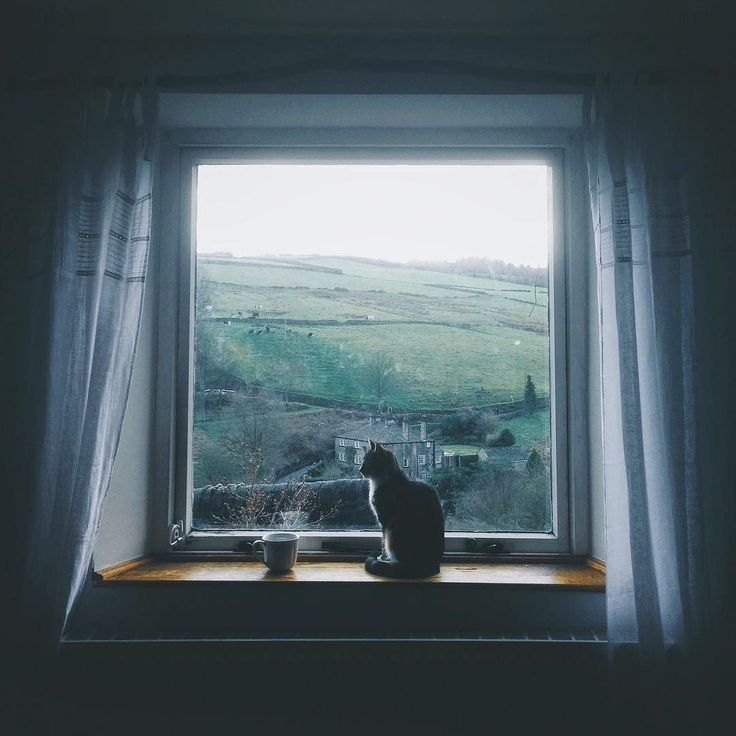 Open Window At Dusk: 428 Best Images About At Dusk I'll Be At The Window