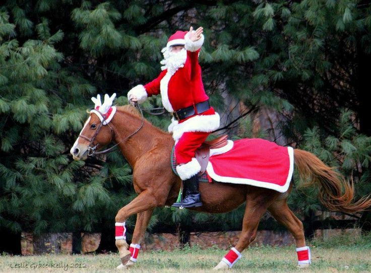 102 best Merry Christmas & New Year Horses images on Pinterest ...