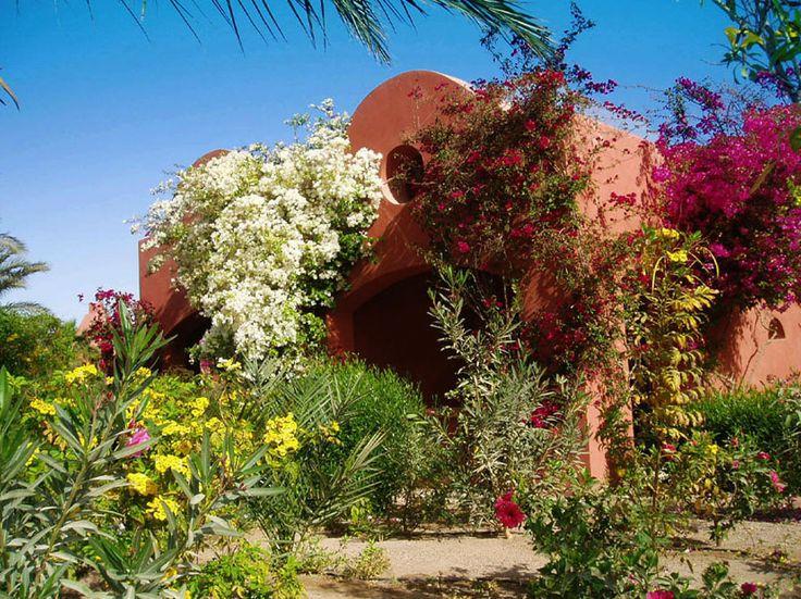 Urlaub in El Gouna in Ägypten - Die Wüste lebt.