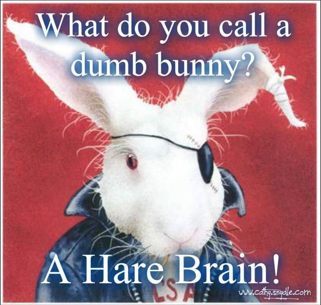 Image result for stupid rabbit jokes