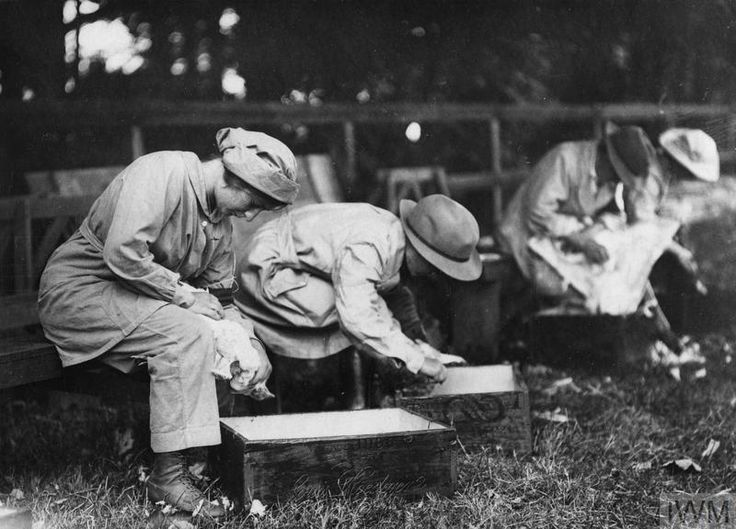 WWI, 25 July 1917; Female workers plucking and trussing poultyr during a competition held at the Whitehall Estate at Bishops Stortford  ©IWM Q 54084
