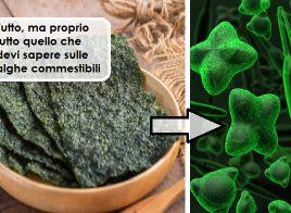Alga Nori e non solo... Per bruciare grassi velocemente, prevenire il tumore e...