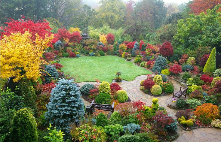 English style garden using japanese maples and conifers for Garden design with japanese maple