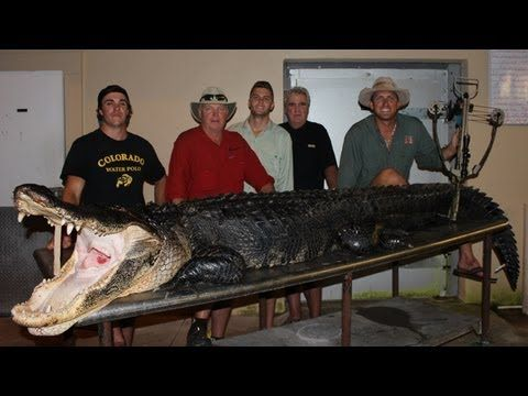 "Alligator Hunting: ""The biggest Gator I've ever seen"" - YouTube"