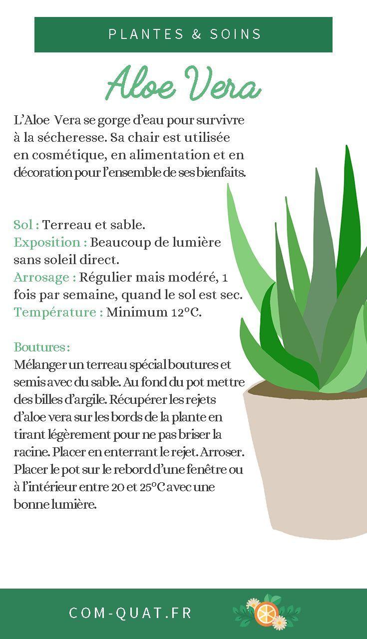 Aloe Vera I 039 M Talking To You About Aloevera This Plant Multiple Magic Benefits Especially In Cos Aloe Ca In 2020 Aloe Vera Cactus House Plants Aloe