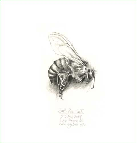 Best 25 honey bee drawing ideas on pinterest bee drawing honey bee pencil drawing by pencilandleaf via flickr ccuart Images