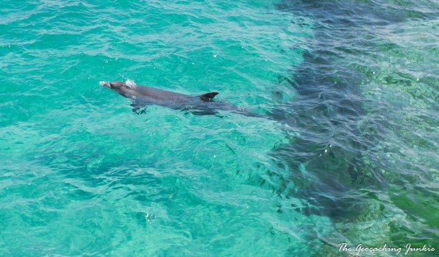 Wild dolphin at the harbour on Inis Oirr, County Clare