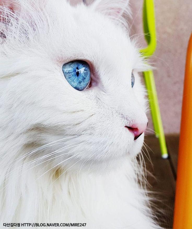 Die Farben der schönsten Katzenaugen der Welt – Cole & Marmelade   – God's Wonderful Creatures